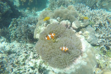 Balicasag Island, Panglao
